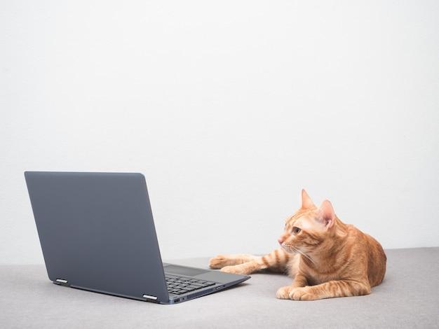 Simpatico gatto sdraiato sul divano e guardando il computer portatile a casa sullo sfondo del muro bianco