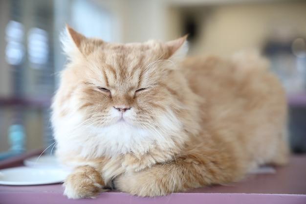 Gatto sveglio che osserva rilassarsi
