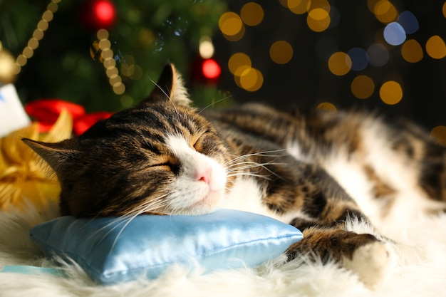 Simpatico gatto sdraiato sul tappeto con decorazioni natalizie