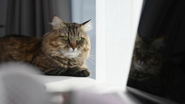 Simpatico gatto sdraiato sulla scrivania con il computer portatile a casa confortevole.