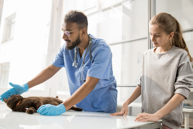 Gatto sveglio che si trova sulla tavola medica mentre giovane veterinario professionista che gioca con lei prima dell'esame