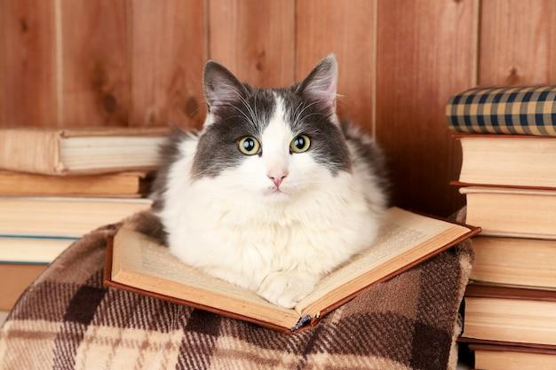 Simpatico gatto sdraiato con il libro sul plaid