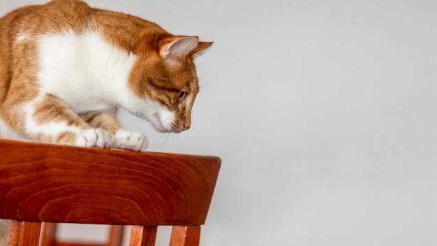 Gatto sveglio che si siede sulla sedia
