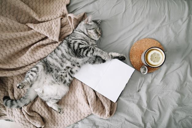 Simpatico gatto che dorme a casa. libro e tazza di tè al limone con decorazioni per la casa sul letto morbido e caldo.