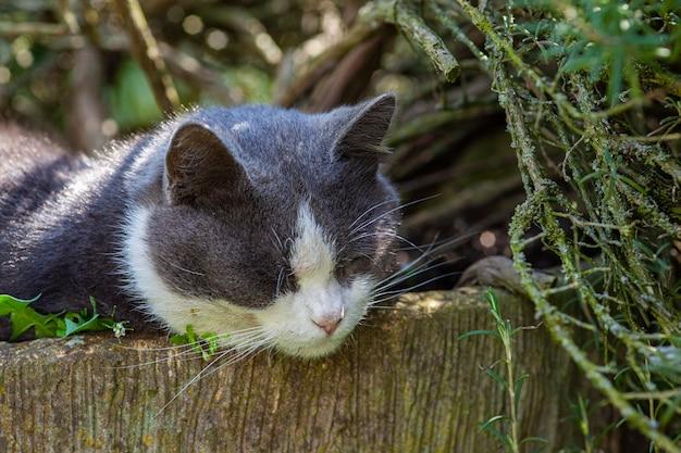 Simpatico gatto dorme immerso tra le piante del giardino