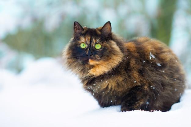 Simpatico gatto che cammina sulla neve