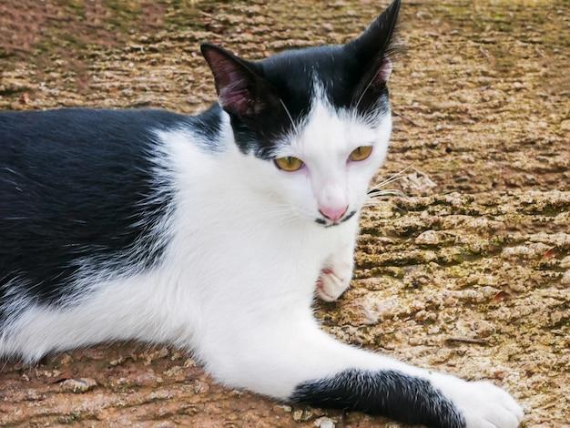 Simpatico gatto con occhi luminosi sdraiato sul cemento