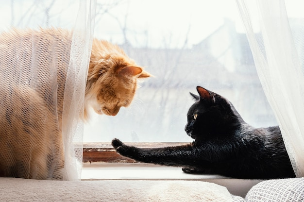 Simpatici gatti diversi vicino alla finestra