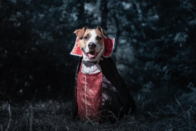 Cane carino vestito da vampiro nella foresta oscura al chiaro di luna. cucciolo di staffordshire terrier sorridente in costume di halloween del vampiro spaventoso nel bosco, girato in chiave di basso