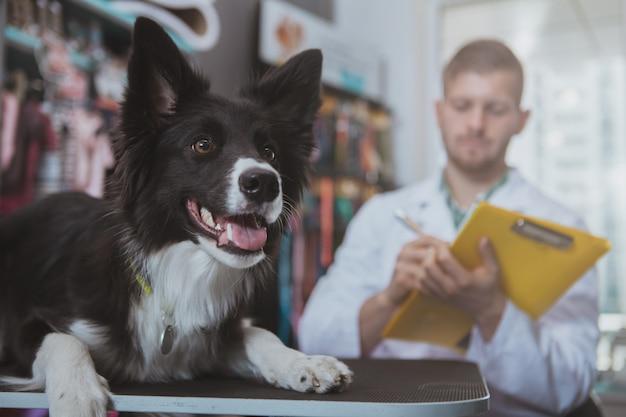 Cane sveglio al controllo medico alla clinica veterinaria
