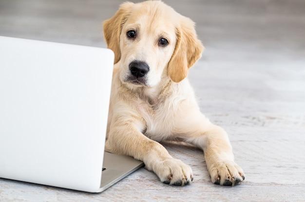 Cane carino vicino al computer portatile