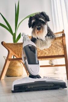 Simpatico cane che riposa su una sedia di vimini vicino all'aspirapolvere verticale