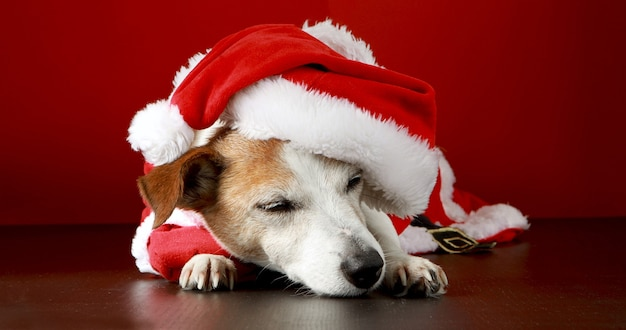 Simpatico cane in costume da babbo natale sdraiato sul pavimento in studio