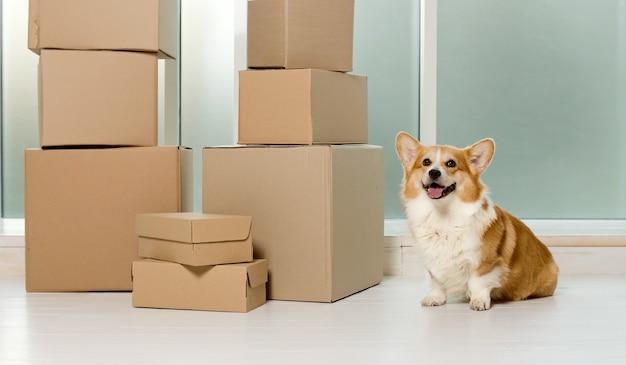 Un simpatico cane seduto vicino alle grandi scatole il sollievo della vita con l'aiuto delle nuove tecnologie con lo shopping online