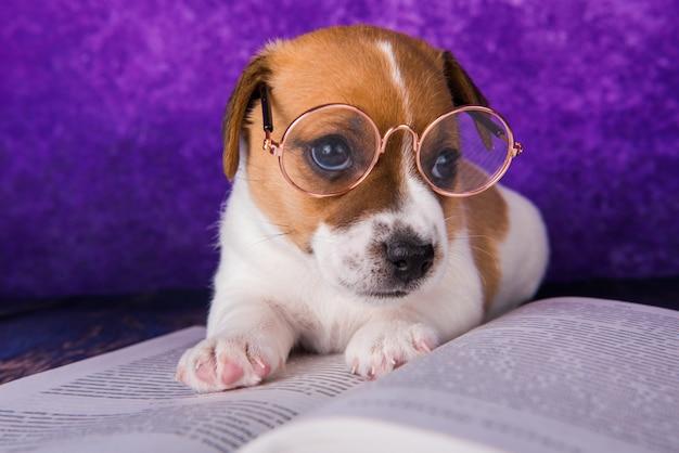 Studente stanco cane carino che legge un libro per insegnare lezioni, si addormenta.