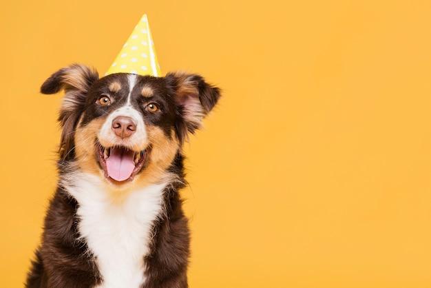 Simpatico cane con un cappello