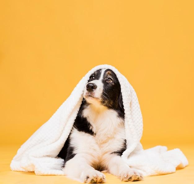 Cane carino con un asciugamano