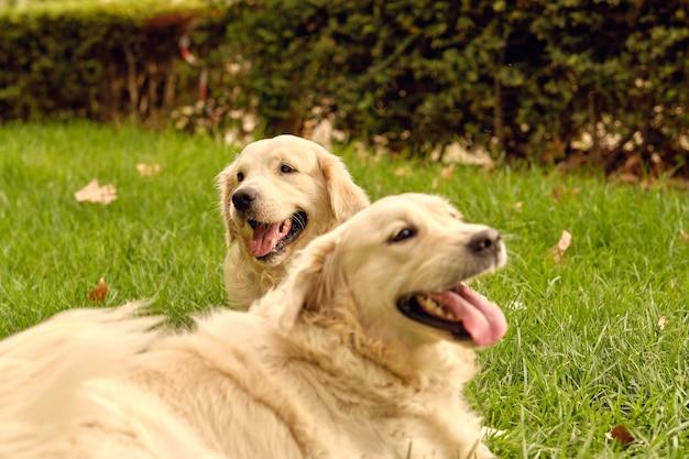 Cani carini sdraiati sul prato nel parco