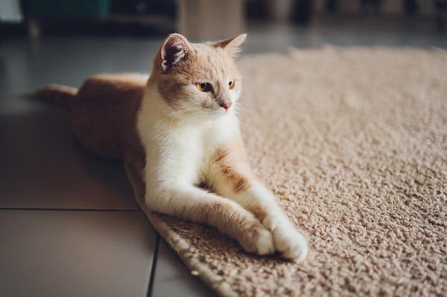 Simpatico gatto domestico che riposa sul pavimento sul tappeto a casa.