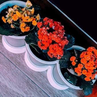 Fiori carini in vaso. concetto di amante delle piante
