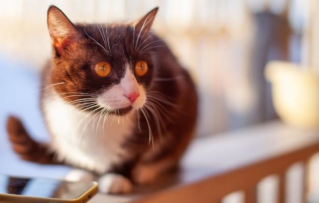 Un simpatico gattino birichino e marrone si siede su una staccionata in legno in inverno