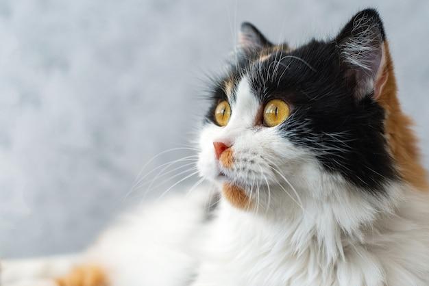 Simpatico gatto birichino con gli occhi arancioni. avvicinamento.