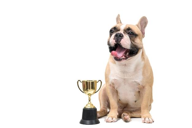 Sorriso sveglio del bulldog francese con il trofeo isolato su fondo bianco, animali domestici e concetto animale