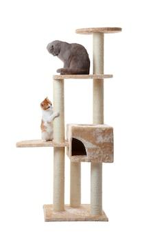 Simpatici gatti divertenti e albero su sfondo bianco