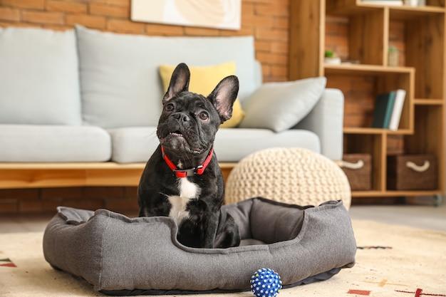 Simpatico cane divertente nel letto dell'animale domestico a casa
