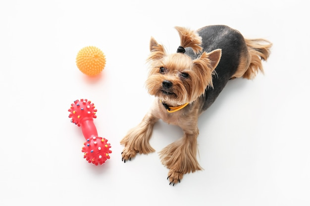 Simpatico cane divertente e giocattoli su sfondo bianco