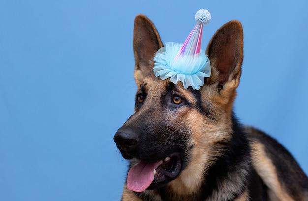 Simpatico cane divertente che indossa un cappello da festa su sfondo blu
