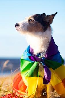 Simpatico cane divertente con bandiera lgbt gay arcobaleno colorato. orgoglio del concetto di vacanza. stile di vita all'aperto. fotografia verticale.