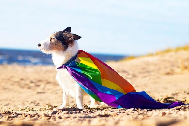 Simpatico cane divertente con bandiera lgbt gay arcobaleno colorato. orgoglio del concetto di vacanza. stile di vita all'aperto