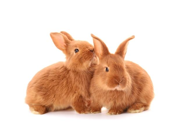 Conigli divertenti svegli su bianco