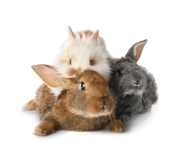 Simpatici conigli divertenti su bianco