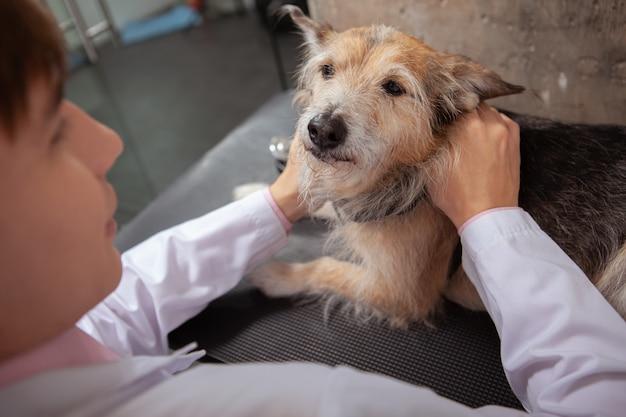 Cane da salvataggio divertente sveglio esaminato dal veterinario maschio giovane all'ospedale degli animali