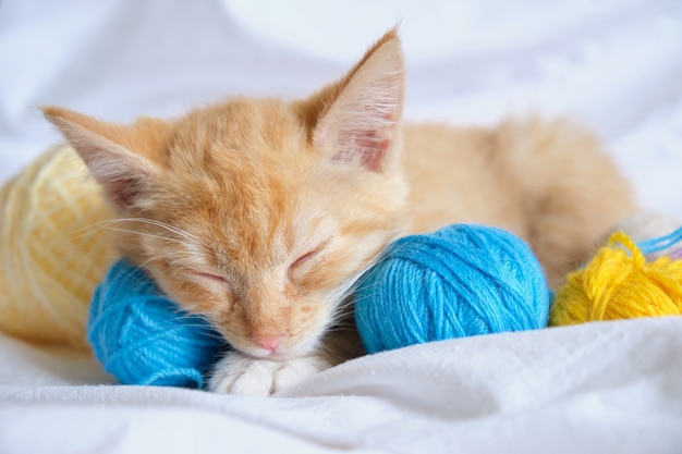 Simpatico gatto allo zenzero e diverse palline di filo colorate sullo sfondo della biancheria da letto bianca, il gattino dorme dolcemente dopo aver giocato con i fili sul letto