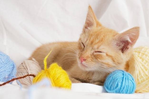 Simpatico gatto allo zenzero e diverse palline di filo colorate sullo sfondo della biancheria da letto bianca