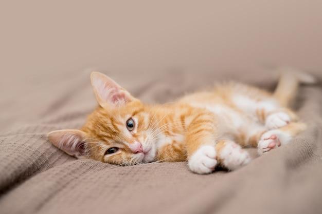 Simpatico gatto zenzero sdraiato a letto. l'animale domestico lanuginoso sta guardando con curiosità. gattino randagio dorme sul letto. foto di alta qualità