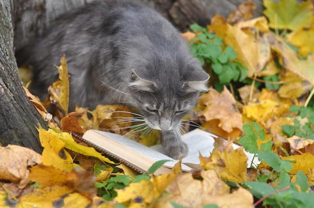 Il gatto grigio sveglio sta leggendo un libro nella priorità bassa di autunno