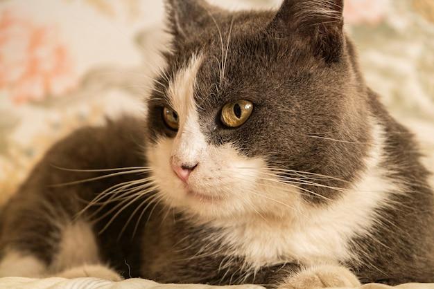 Simpatico ritratto di gatto grigio in interni illuminati dalla luce del sole