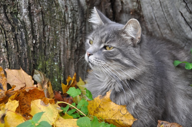 Gatto grigio sveglio che si siede in foglie secche cadute, autunno