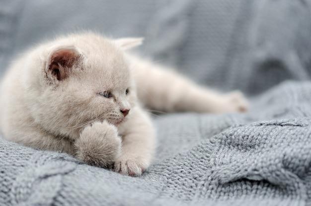 Simpatico gattino grigio divertente in panno grigio