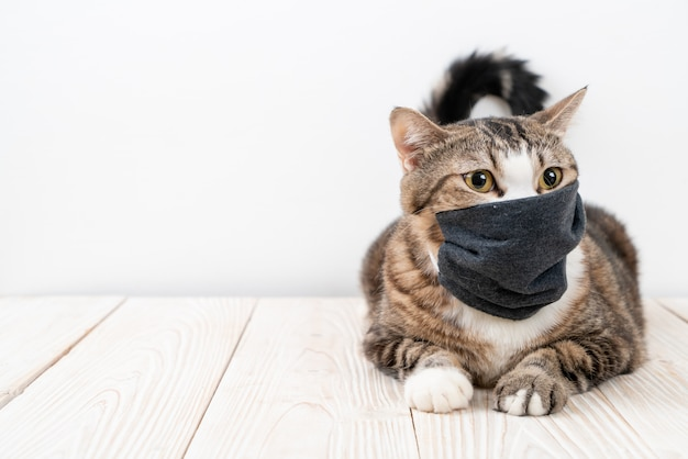 Simpatico gatto grigio con maschera per proteggere coronavirus o covid 19