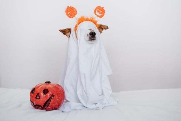 Simpatico cane jack russell a casa con costume da fantasma. decorazione di halloween. segno di boo della holding della mano della donna