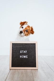 Cane sveglio di jack russell a casa con la bacheca con il messaggio di soggiorno della casa. pandovic coronavirus covid-19 concept