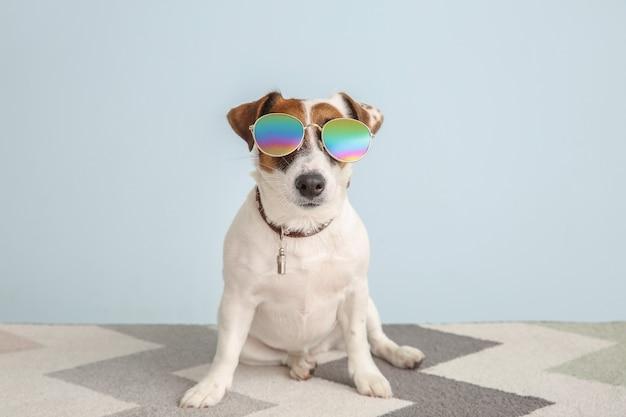 Carino jack russell terrier con eleganti occhiali da sole su sfondo colorato