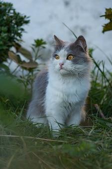 Gattino sveglio tra i fiori estivi nella natura crogiolarsi al sole