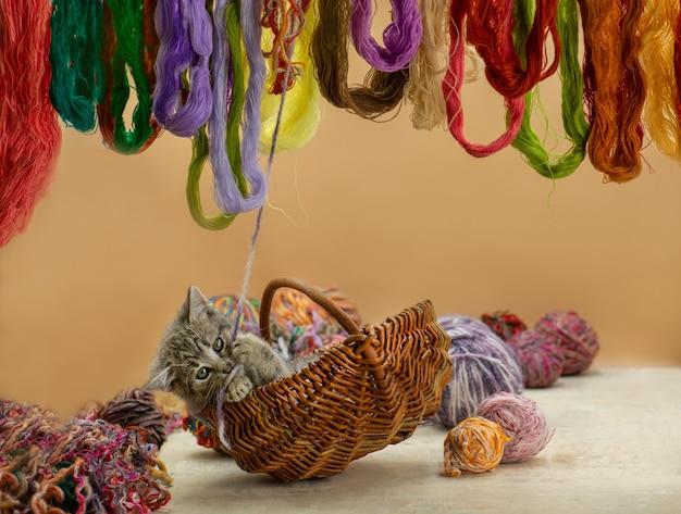 Gattino sveglio che si siede in un cestino con gomitoli di lana