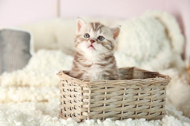 Gattino carino in cesto di vimini a casa